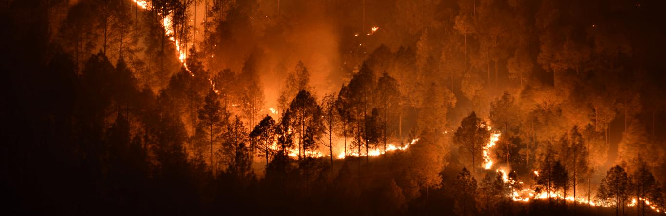 Seguros SURA - Habitat - Geociencias - Imagen principal - impacto - incendios - forestales - ecosistemas