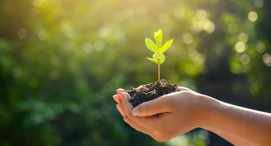suramericana-sostenibilidad-ecoeficiencia-y-reduccion-impactos-ambientales