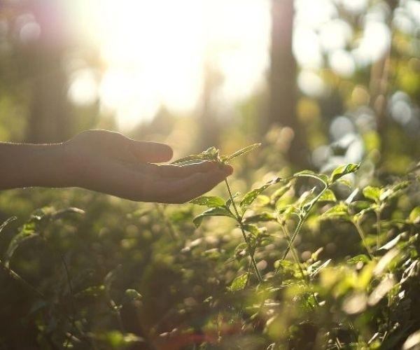 DíaMundial, MedioAmbiente, EcologiaResiliente